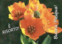 Non lasciatevi rubare la speranza! È Risorto! Buona Pasqua! (papa Francesco) 1