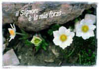 Il Signore è la mia forza (Sal 28,7) - poster 01